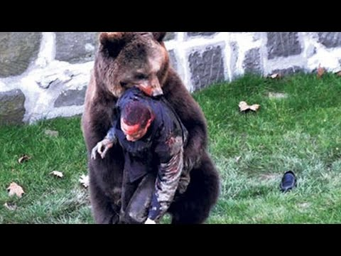 Unbelievable bear attacks & interactions caught on camera!