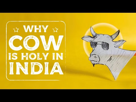 Why are cows sacred in india ?