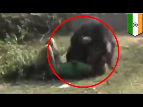 Bear eats man: bear mauls man to death by clawing and eating his face in india
